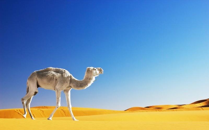 همه آنچه درباره مراکش نمی دانید!