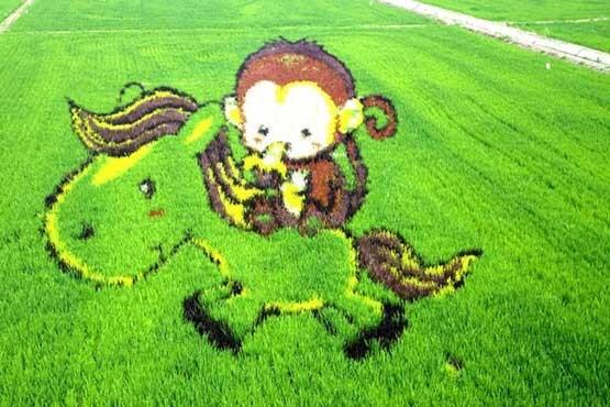 تصاویری بی نظیر از هنرنمای مزارع برنج!