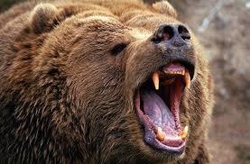 تعبیر خواب خرس