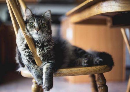 گربهها نام خود را میدانند