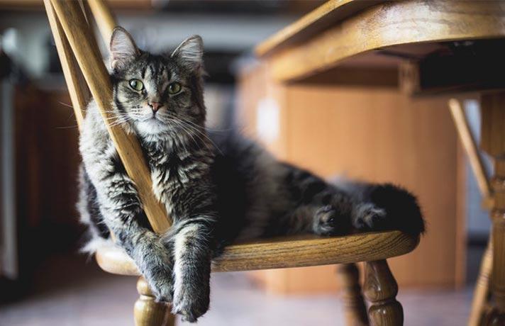 تعبیر خواب گربه چیست؟