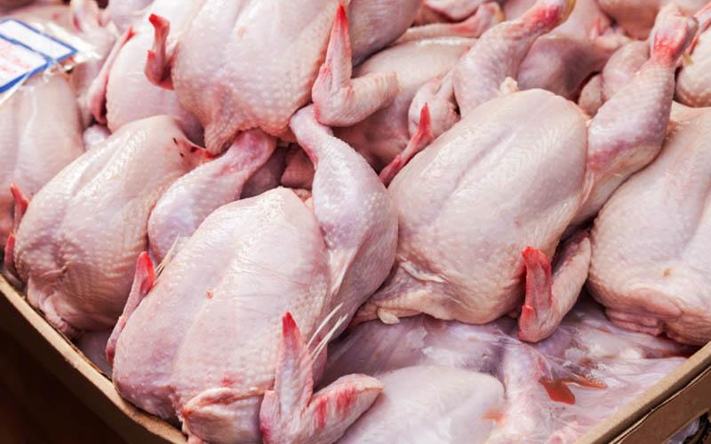 کاهش قیمت مرغ به روایت حجتی