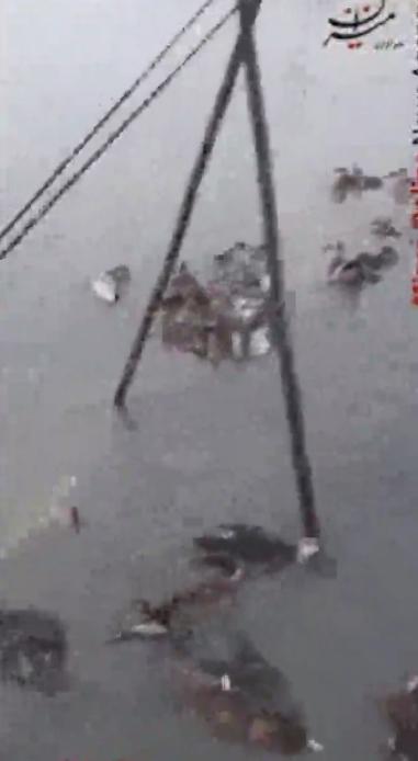 کشتار پرندگان مهاجر در هورالعظیم+فیلم