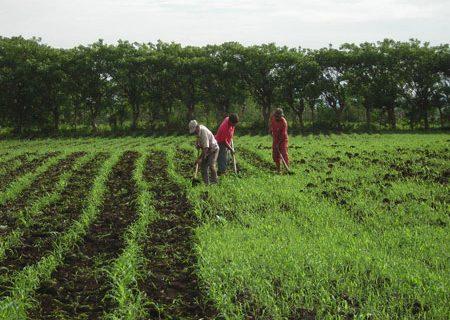 روز کشاورزی و دهداری