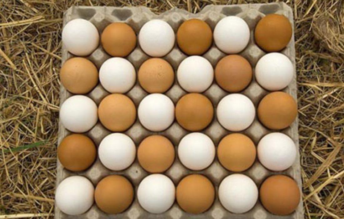 سلام تخم مرغ/ خوبی؟ خداحافظ