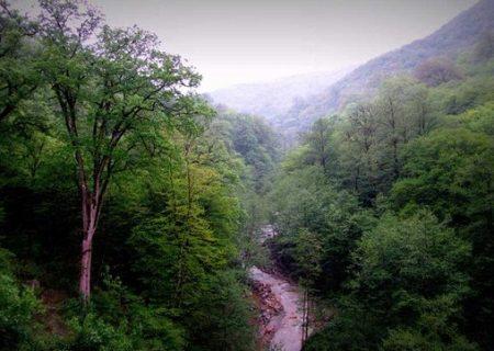 امیدواری به بازپسگیری جنگلهای هیرکانی از اوقاف