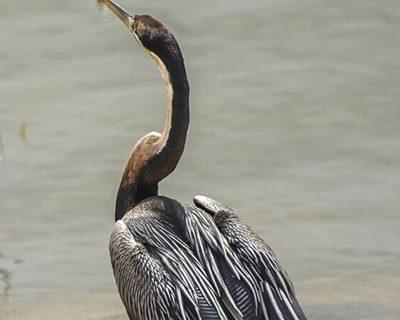 پرنده نادر آفریقایی در ایران تلف شد/ عکس