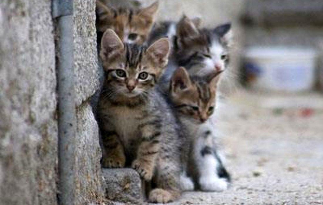 ضرورت ساماندهی حیوانات بی سرپرست و آسیب دیده شهری در سطح ملی