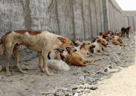 تهدید حیاتوحش ایران توسط سگهای ولگرد