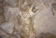 مرگ دردناک پلنگ ایرانی در آتشسوزی کوه حاتم/ عکس