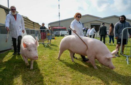 نمایشگاه کشاورزی و دامداری در بریتانیا/ عکس