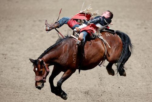 سواری گرفتن از اسب وحشی / عکس