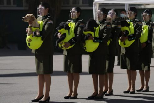 سگ های آموزشی پلیس /عکس