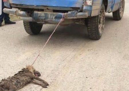 دهیار حیوانآزار در نوشهر دستگیر شد