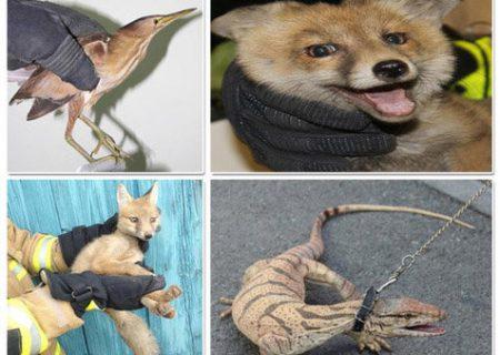 با خرید و فروش حیوانات وحشی برخورد کنید/ حیوان کالا نیست
