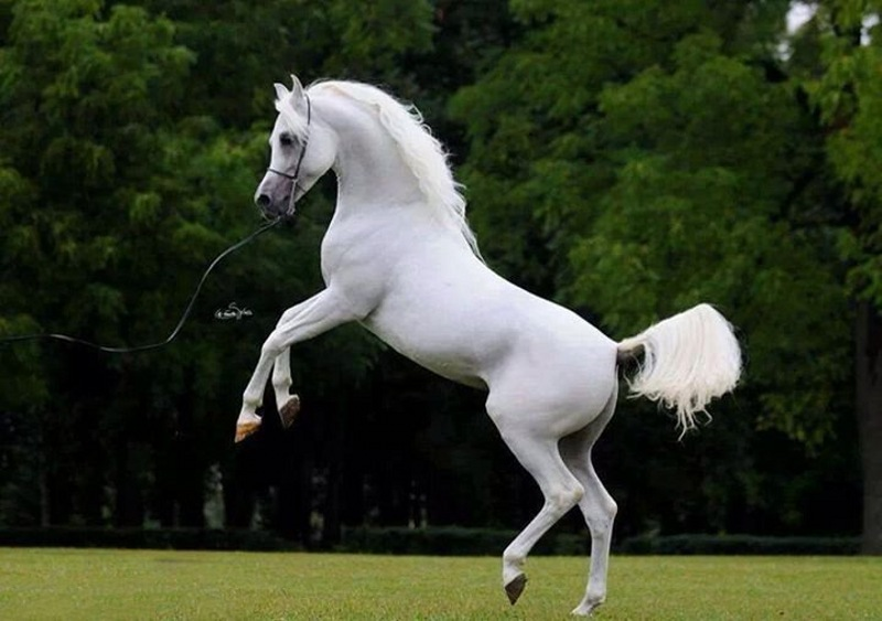 تجارت میلیاردی اسپرم اسب در ایران
