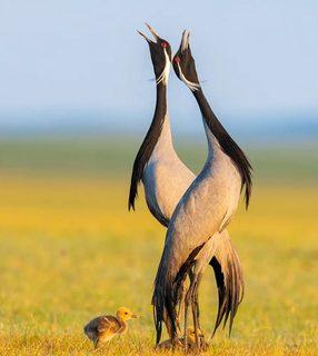 عکس های برگزیده گاردین از پرندگان در سال ۲۰۲۱