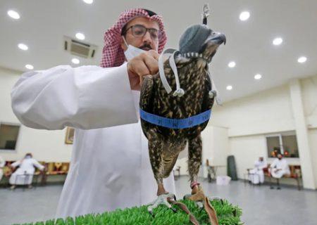 حراجی فروش شاهین شکاری در کویت/ عکس