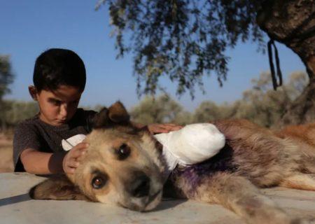 مراقبت کودک سوری از سگ قطع عضو شده /عکس