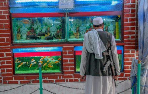یک نیروی طالبان در آکواریوم باغ وحش/عکس