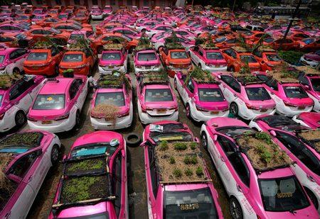 کاشت سبزه روی سقف تاکسی های بیکار شده در اثر بحران کرونا /عکس