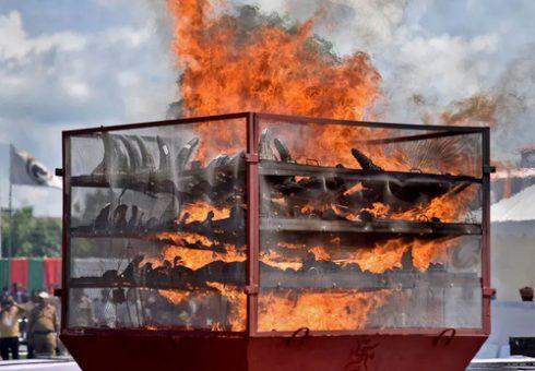 آتش زدن شاخ های کرگدن کشف شده از قاچاقچیان /عکس