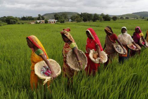 زنان کشاورز هندی / عکس